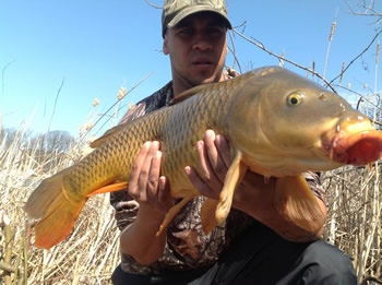 Chris Kotyk is co-director of the Wild Carp Club of St. Catherines, est 2013