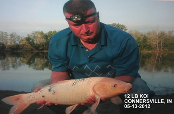 Indiana Carp CLub Director Tony Stout with a 12+ lb koi caught in Connersville, IN