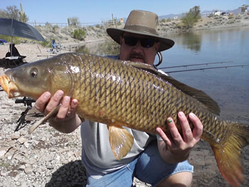 Club Director Robert Hogan with a common carp caught during a session in Arizona